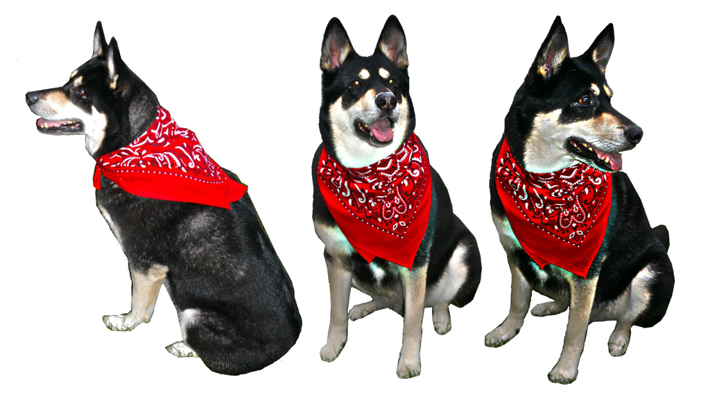 big-bandana-slide-dual-dog-scarf-apron-1